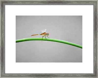 Female Neon Skimmer Framed Print by Steven Michael