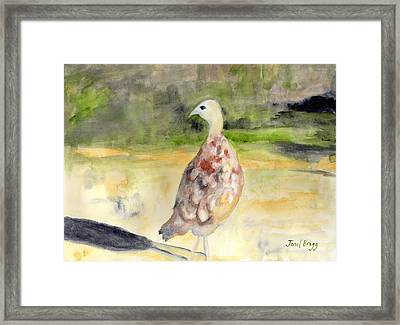 Female Pheasant Framed Print