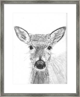 Female White-tailed Deer Framed Print by Marqueta Graham