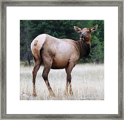 Feme Elk Framed Print by Tiffany Vest