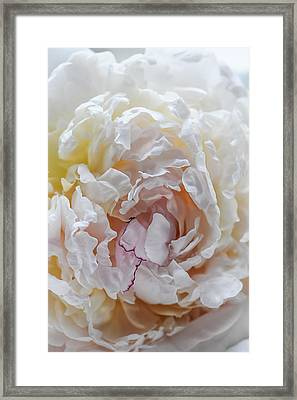 Feminine Abstraction Framed Print