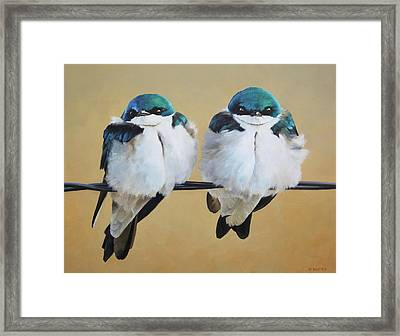 Fence Line Swallows Framed Print