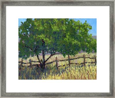 Fence Line Tree Framed Print