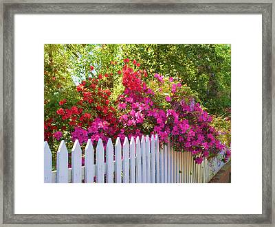 Fence Of Beauty Framed Print