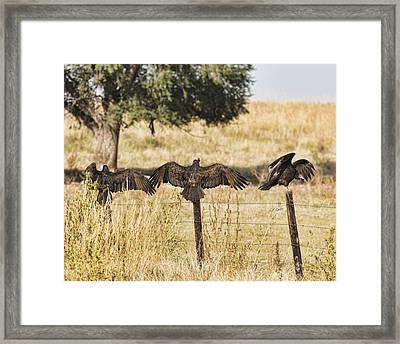 Framed Print featuring the photograph Fence Post Vultures by Bill Kesler