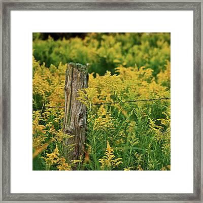 Fence Post7139 Framed Print