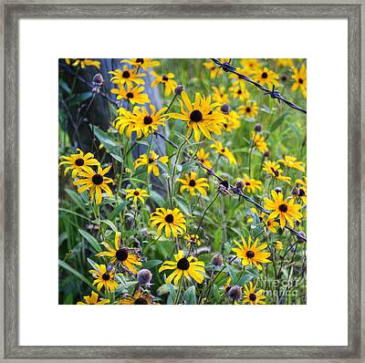 Fence Row Flowers Framed Print by Pete Hellmann