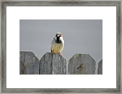 Framed Print featuring the photograph Fence Sitting  by Teresa Blanton