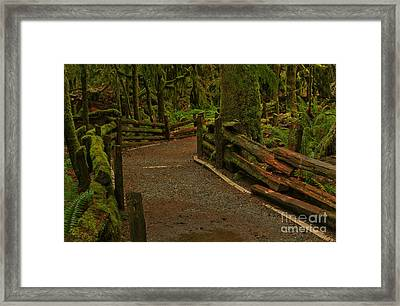 Fence Through The Forest Framed Print by Adam Jewell