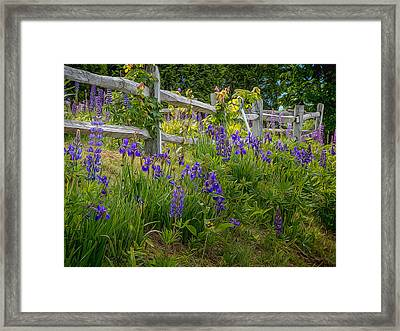 Fence With Lupine And Irises Framed Print by Diane Moore