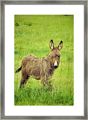 Fenced In Framed Print by Jan Amiss Photography