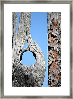 Fencework Framed Print