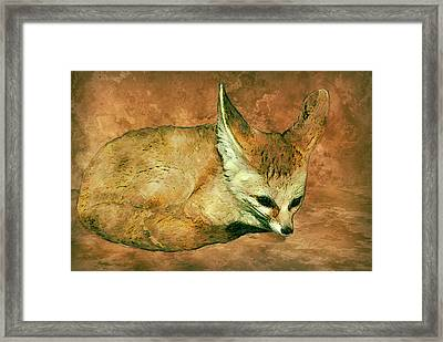 Fennec Fox Framed Print by Jack Zulli