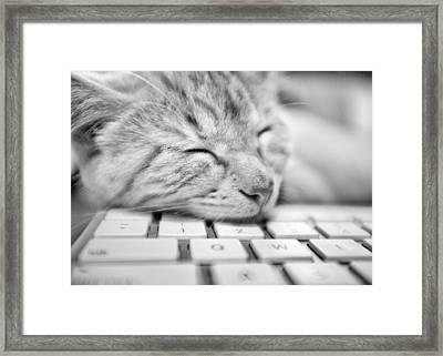 Fergus Asleep Framed Print by Patrick M Lynch