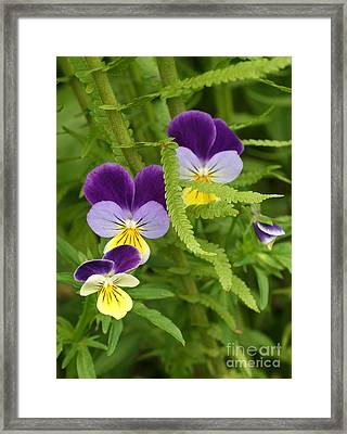 Fern And Johnny Framed Print
