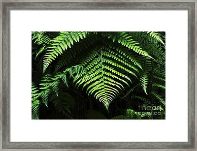 Fern Canyon California 1 Framed Print