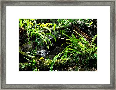 Fern Custers On Fallen Tree  Framed Print by Thomas R Fletcher