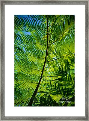Fern Detail Framed Print by Himani - Printscapes