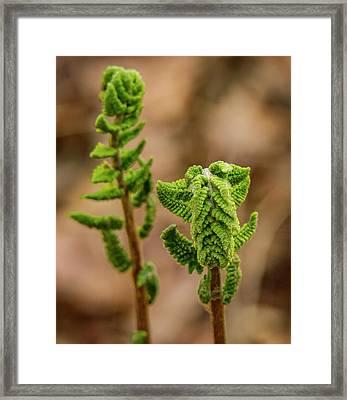 Fern Duo Framed Print by Jean Noren