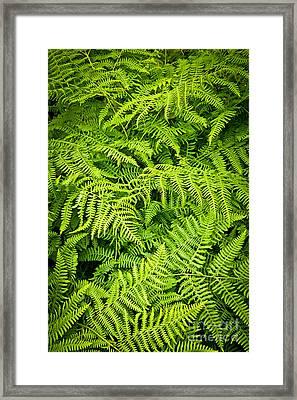 Fern Framed Print by Elena Elisseeva