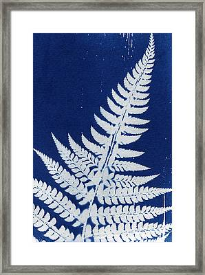 Fern Framed Print by Elspeth Ross
