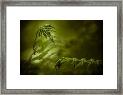 Fern Encounter Framed Print by Chris Bordeleau