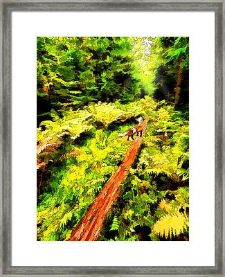 Fern Forest Path In Autumn Framed Print