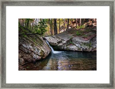 Fern Gully Framed Print by James Barber