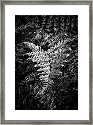 Fern In Black And White Framed Print