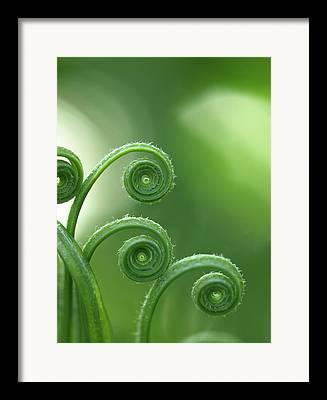 Garden Images Framed Prints