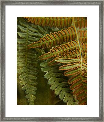 Fern In My Garden Framed Print