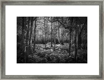 Fern Lace B/w Framed Print by Marvin Spates