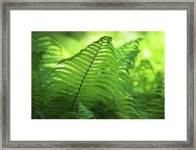 Fern Leaves 1. Green World  Framed Print