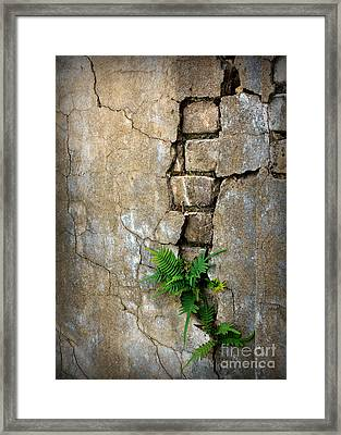 Fern Life Framed Print by Perry Webster
