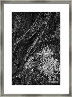 Fern Framed Print by Russ Brown