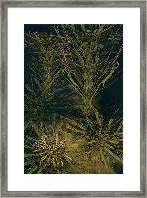 Fern Series Inky Aether Framed Print