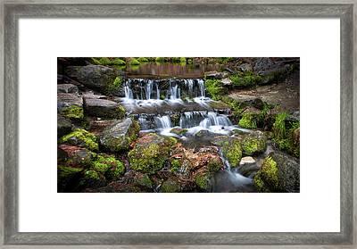 Fern Springs Framed Print