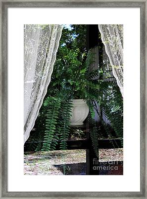 Fern Through A Window Framed Print