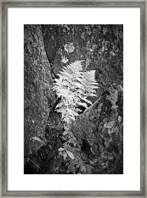Fernglow Framed Print by Harry H Hicklin