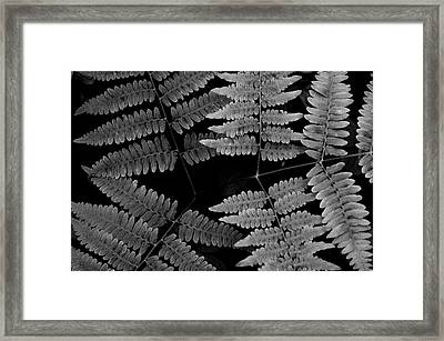 Framed Print featuring the photograph Ferns by Alana Ranney