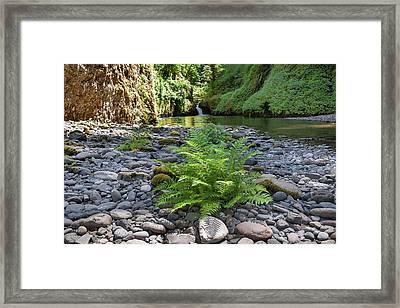 Ferns Along Banks Of Eagle Creek Framed Print
