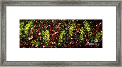 Ferns And Berries Framed Print