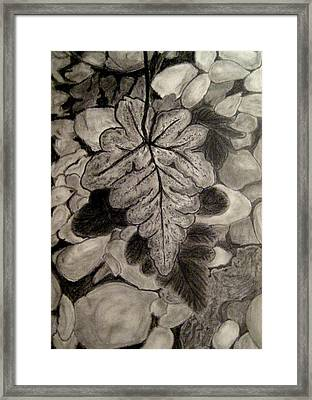 Ferns And Pebbles Framed Print