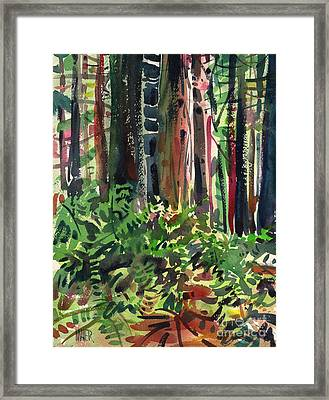 Ferns And Redwoods Framed Print by Donald Maier