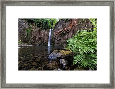 Ferns And Rocks By Abiqua Falls Framed Print by David Gn