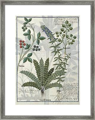 Ferns, Brambles And Flowers Framed Print by Robinet Testard