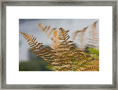 Ferns Growing By The River Framed Print by Barbara  White