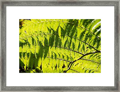 Ferns In Sunlight Framed Print