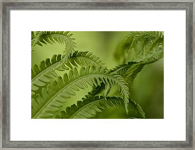Ferns Framed Print