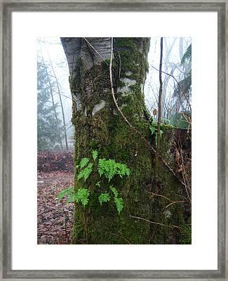Ferns On A Foggy Day Framed Print by Ken Day